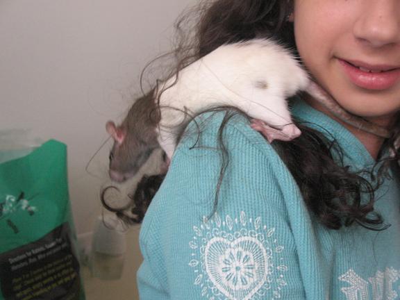 Ratshouldergirl